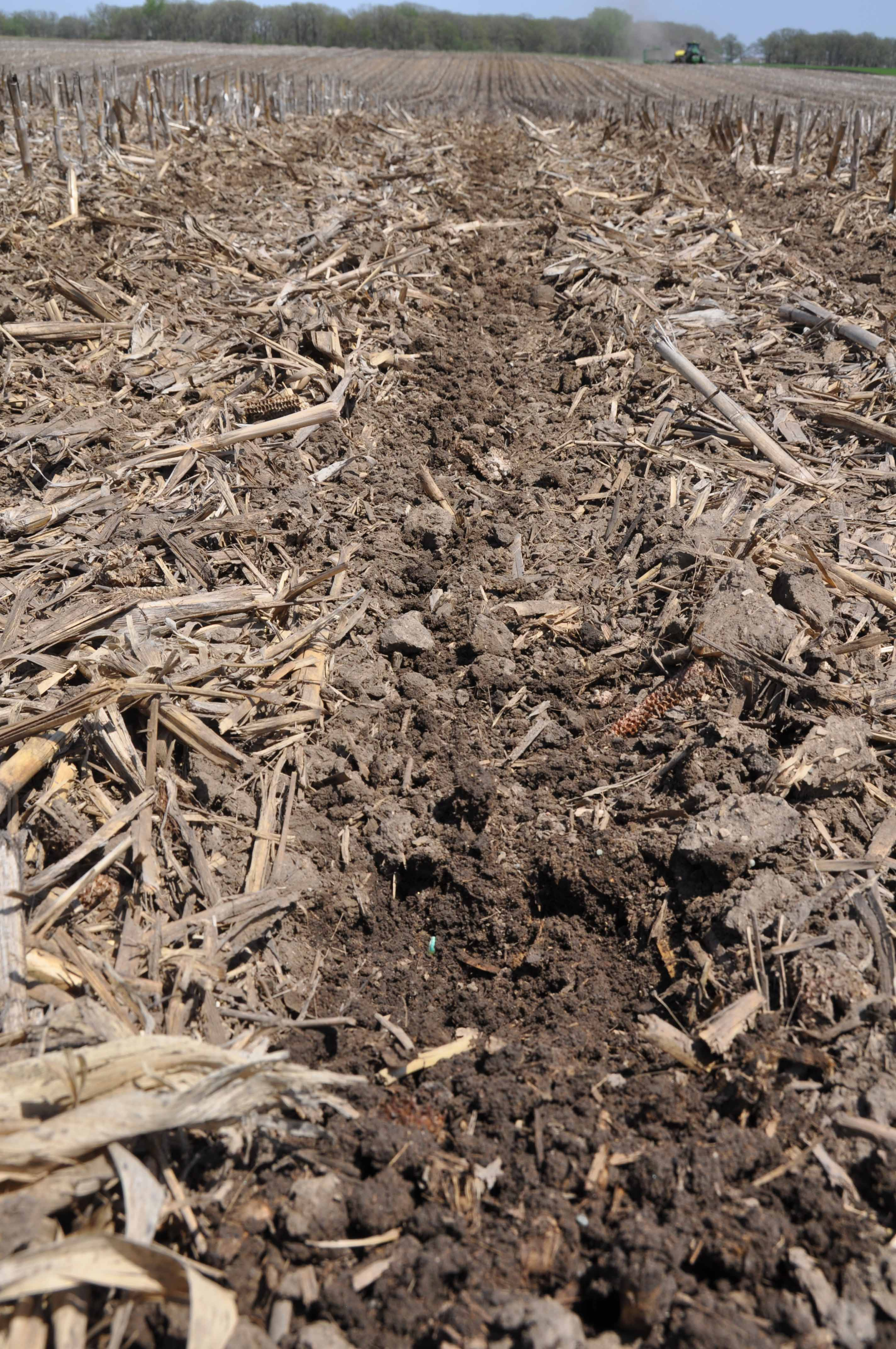 Pederson Planting Zone