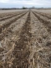 Soil Warrior Zones